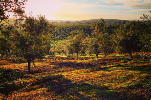 Azeite-do-Alentejo_OliveEmotion_5